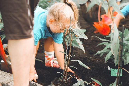 25 Volunteering Ideas Families Can Do Together